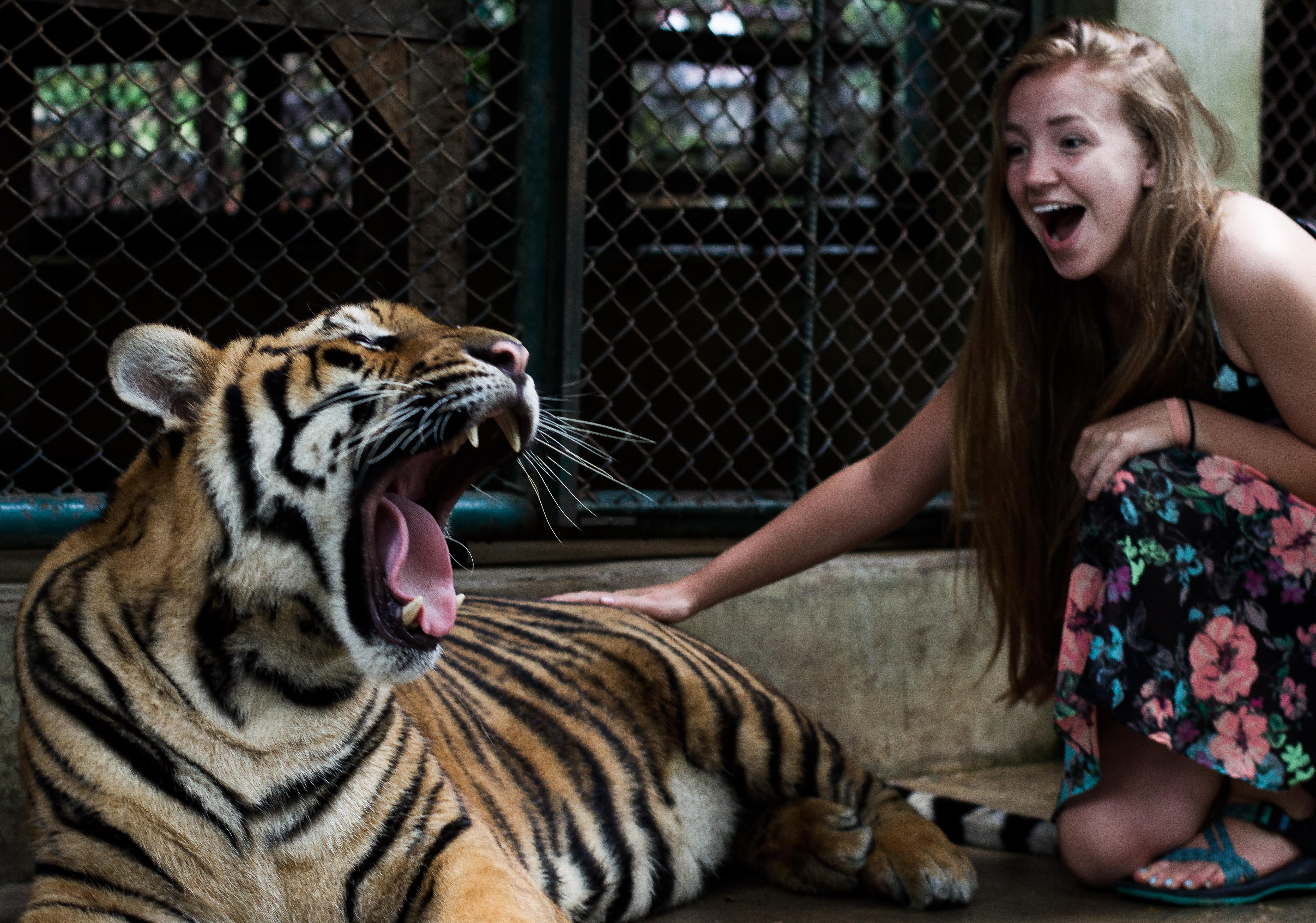 Tiger_2-1.jpg